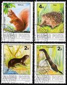 Mustela erminea, Sciurus vulgaris, Lutra lutra, Erinaceus concolor — Stock Photo