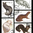 Fur-bearing Animals. Postage stamps of the USSR — Stock Photo