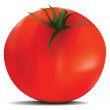 Tomato in vector - Stock Vector