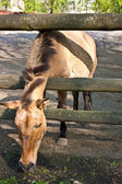 Horse eat grass — Stock Photo