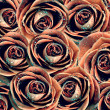 Valentine's background with roses — Photo
