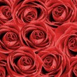 Stock Photo: Valentine's background with roses