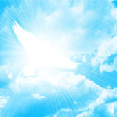 Glowing dove in a blue sky — Stock Photo