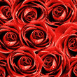 Valentine's background with roses — Stock Photo