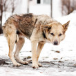 Homeless stray dog — Stock Photo #9324664
