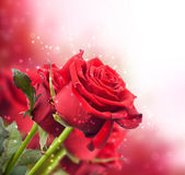 Background with red roses — Stock Photo