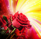 Background with red roses — Foto Stock