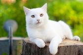 White cat in the garden — Stock Photo