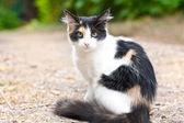 Black white cat in the garden — Stock Photo