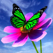 Stock Photo: Beautiful Cosmos Flower and butterfly
