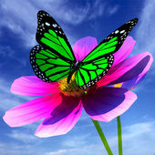 Beautiful Cosmos Flower and butterfly — Stock Photo