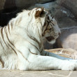 Bengal tiger — Stock Photo #10723256