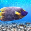 Underwater world - panorama — Stock Photo #9674800