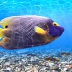 onderwater wereld - panorama — Stockfoto