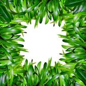 Herbal background — Stock Photo