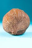 Fruit Salak — Stock Photo
