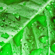 Beautiful green leaf — Foto Stock