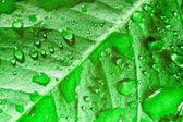 Bella foglia verde — Foto Stock