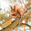 Squirrel in the winter park — Stock fotografie