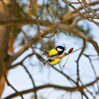 Bird in the  winter nature — Stock fotografie