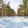 Winter landscape with snow — Stock Photo #9100781