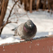 Bird in the winter nature — Stock Photo