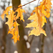 Leafs in the park — Stockfoto