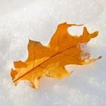 Leaf on a snow — Stock Photo