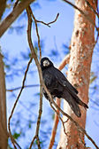 Bird in the winter nature — Stock Photo