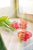 Tulips on a window sill — Stock Photo