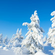 Winter in the finland — Foto Stock