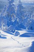 Invierno en la Finlandia — Foto de Stock