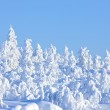 Winter in the finland — Stock Photo