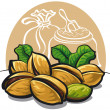 Pistachios nuts - Stock Vector