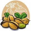 Stock Vector: Pistachios nuts