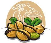 Pistachios nuts — Stock Vector