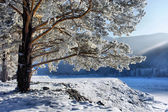 Snow on branches of a winter tree. — Stock Photo
