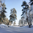 Winter landscape. Wood lake under snow and ice. — Foto de Stock
