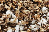 Pile of wood chips background — Stock Photo