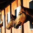 Horses in their stable - Photo