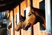 Horses in their stable — Stock Photo