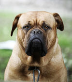 Portrait of dog — Stockfoto