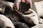 Handful of raw coffeebeans — Stock Photo