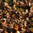 Fallen leafs — Stock Photo #8028695