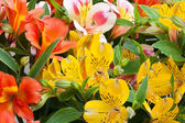 Beautiful bouquet of colorful flowers (Alstroemeria) — Stock Photo