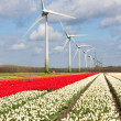 Big Dutch colorful tulip fields with wind turbines — Stok fotoğraf