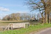 Néerlandais pâturages avec ferme et clôture — Photo
