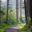 Forest landscape with sunlight through the trees — Stock Photo #8013838