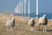 Windmills and sheep — Stock Photo