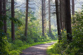 Forest landscape with sunlight through the trees — Stock Photo